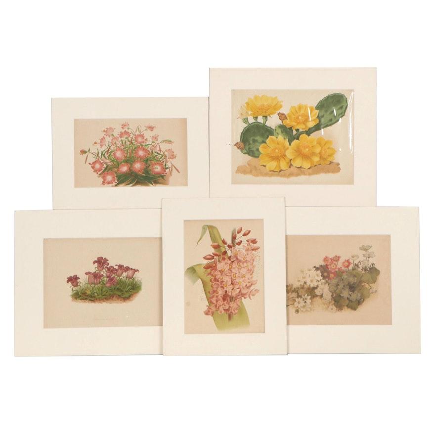 Botanical Chromolithographs of Flowers, Early 20th Century