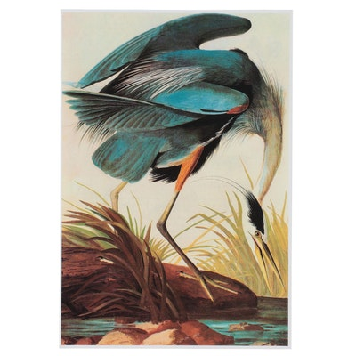 "Offset Lithograph After John James Audubon ""Blue Heron,"" 21st Century"