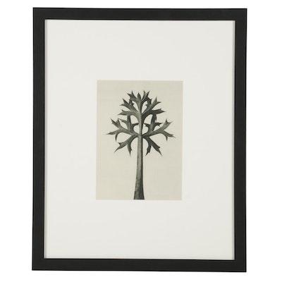 "Botanical Photogravure After Karl Blossfeldt ""Mediterranean Sea Holly,"" 1936"