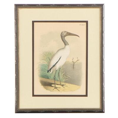 Jacob Henry Studer Chromolithograph of Wood Ibis, Circa 1873