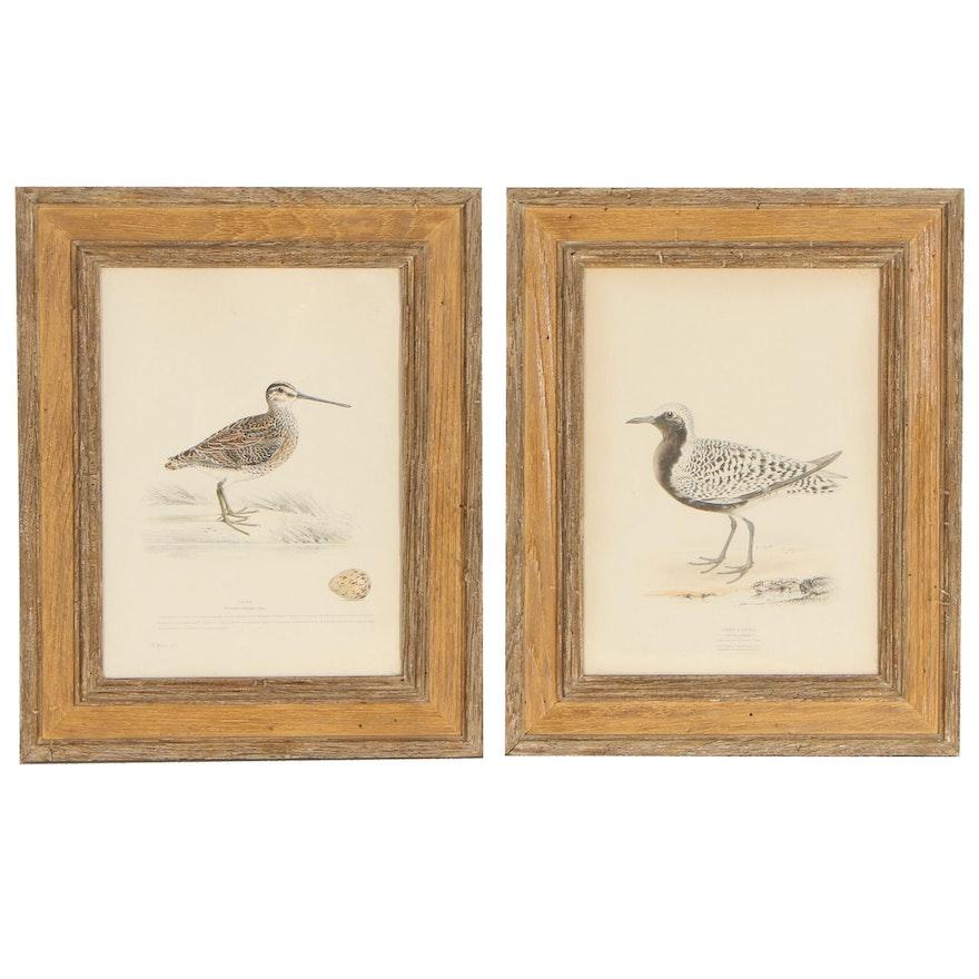 Hand-Colored Lithographs After Henry Leonard Meyer of Bird Illustrations