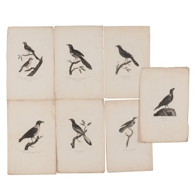 Ornithological Engravings After Johann Lebrecht Reinold