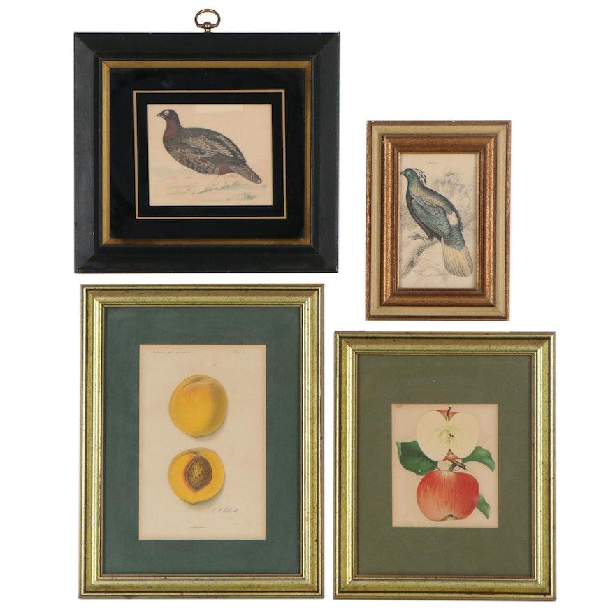 Fruit Chromolithographs and Bird Engravings, Circa 1900