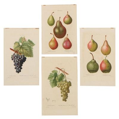 Chromolithographs of Fruit, Late 19th Century