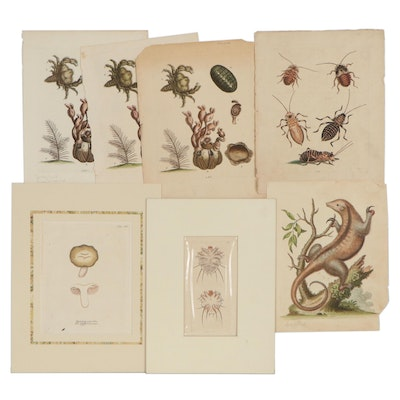 Hand-Colored Engravings After George Edwards, Richard Polydore Nodder and More
