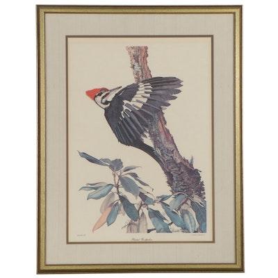 "Sallie Ellington Middleton Offset Lithograph ""Pileated Woodpecker"""