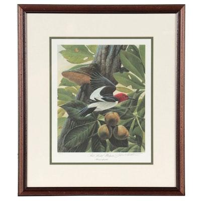 """John A. Ruthven Offset Lithograph """"Red-Headed Woodpecker"""""""