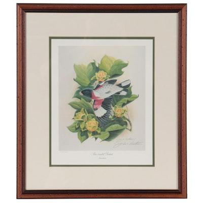 "John A. Ruthven Offset Lithograph ""Rose-Breasted Grosbeak"""