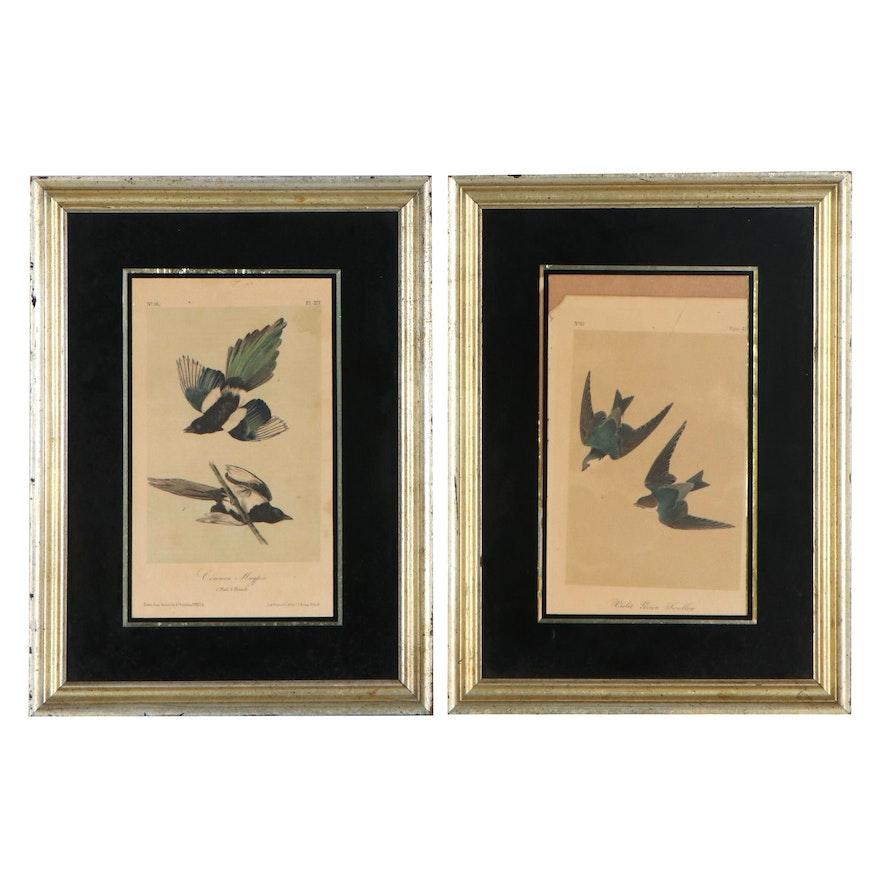 Ornithological Hand-Colored Lithographs After John James Audubon, 1840