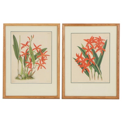 John Nugent Fitch Hand-Colored Lithograph of Orchids