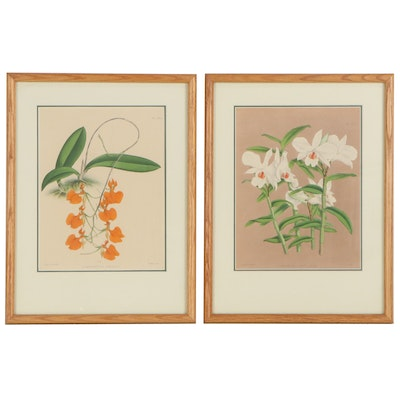 John Nugent Fitch Hand-Colored Lithographs of Orchids, Circa 1882