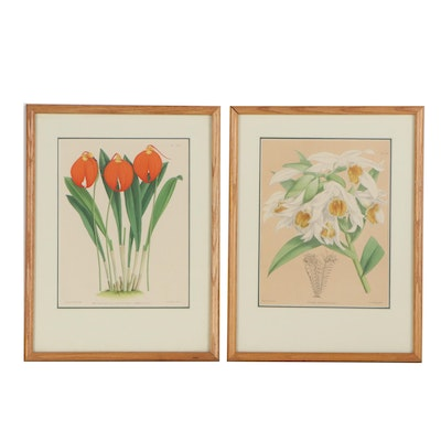 John Nugent Fitch Hand-Colored Lithographs of Botanical Species, Circa 1882