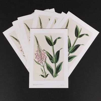 Offset Lithographs of Botanical Illustrations