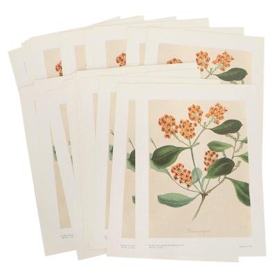 "Botanical Offset Lithograph ""Daviesia Latifolia,"" 1987"