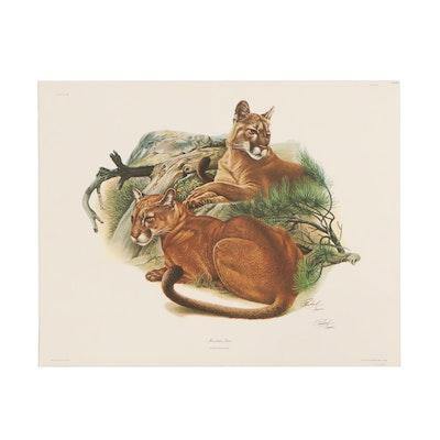 "Richard Timm Offset Lithograph ""Mountain Lion,"" 1974"