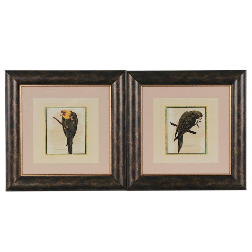 "Offset Lithograph Bird Illustrations ""Carolina Parrot,"" 21st Century"