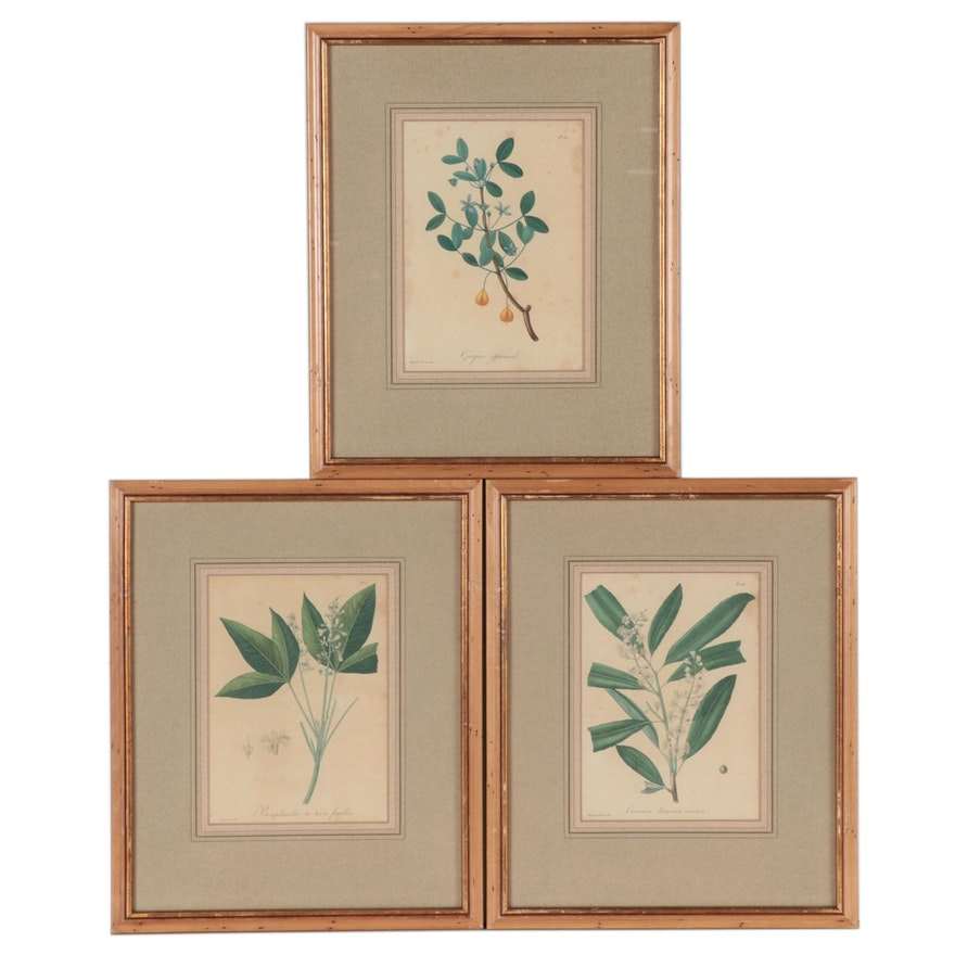 Édouard Hocquart Botanical Color Lithographs