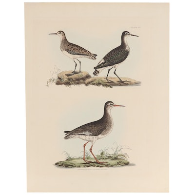Hand-Colored Engraving After Prideaux John Selby of Bird Illustrations