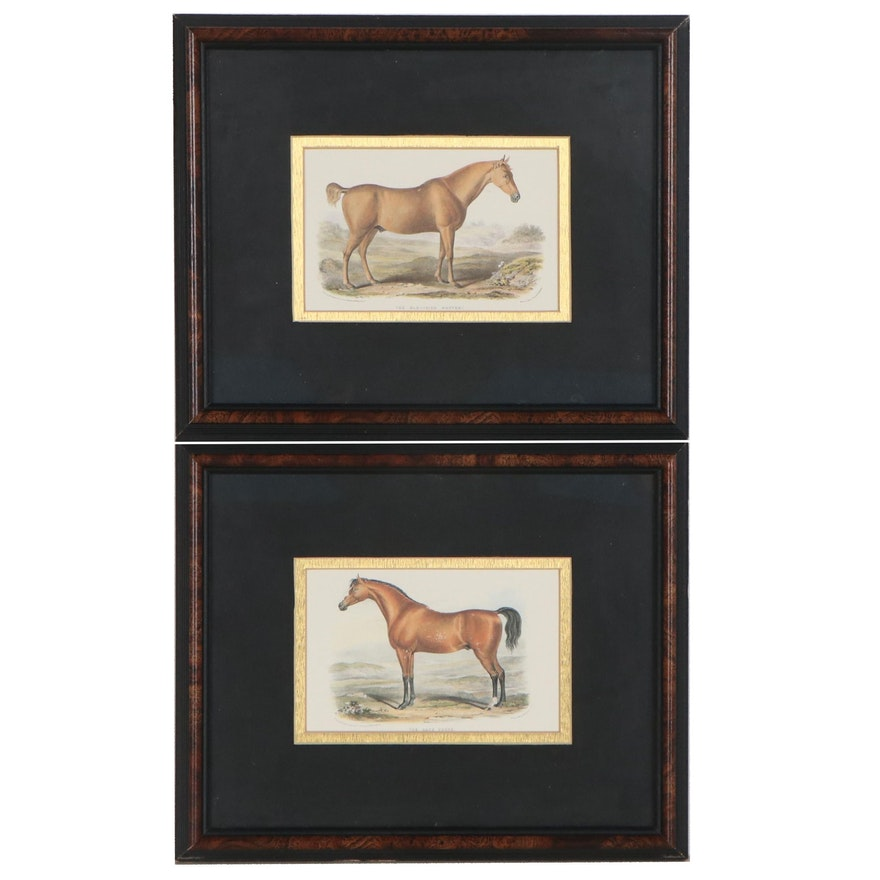 Offset Lithographs After Francis Nicholson of Race Horses, Late 20th Century