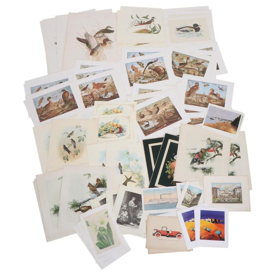 Botanical, Ornithology, Landscapes, and Other Photomechanical Prints