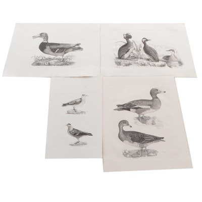 Etchings After Prideaux John Selby and J.J. Audubon, Late 20th Century