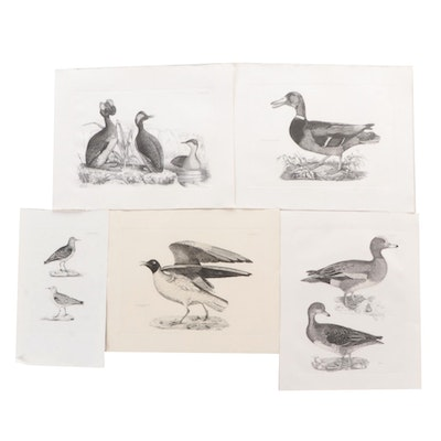 Etchings After Prideaux John Selby of Bird Illustrations, Late 20th Century