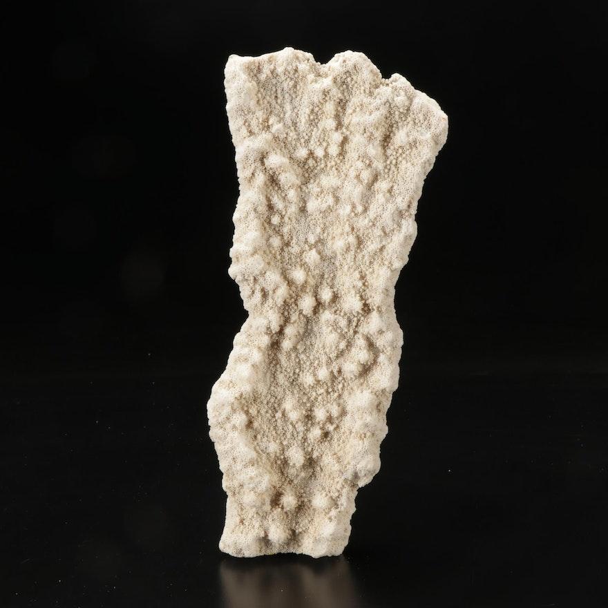 Scleractinian Coral Specimen