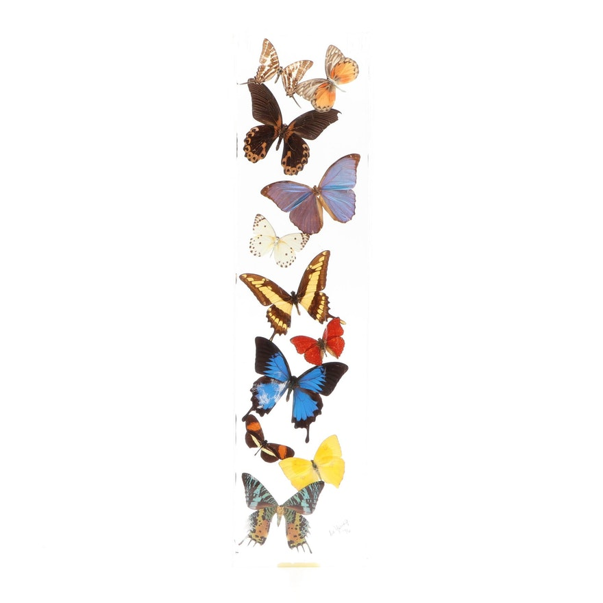 De Young Butterfly Specimens Display in Acrylic Case, 1996