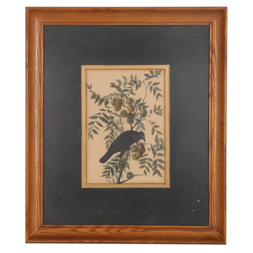 "Offset Lithograph After John James Audubon ""American Crow"""