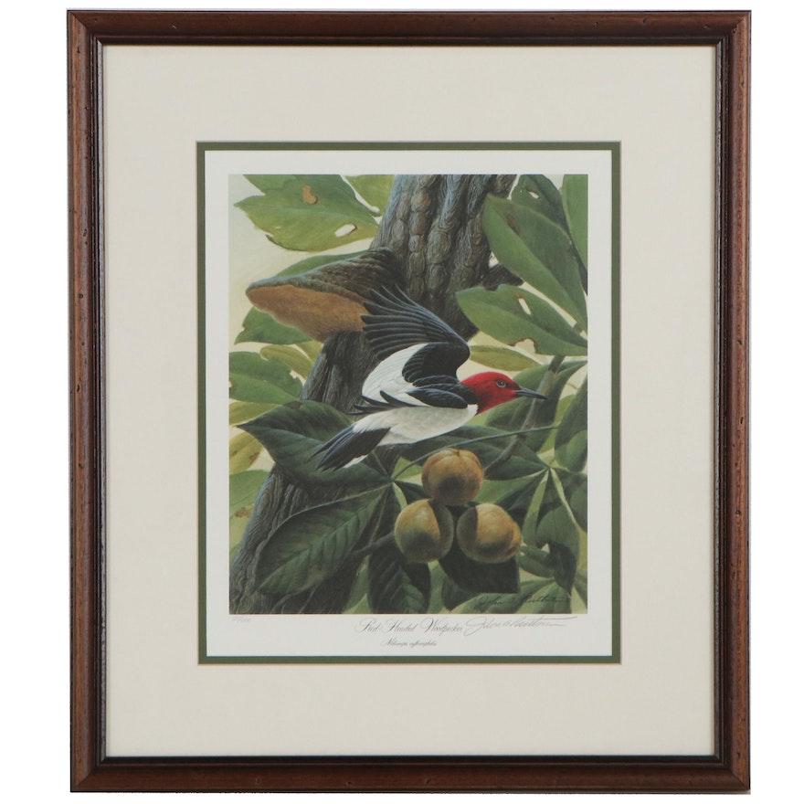 "John Ruthven Offset Lithograph ""Red-Headed Woodpecker"""
