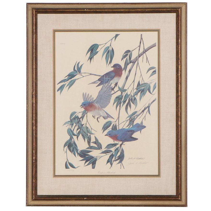 "John A. Ruthven Offset Lithograph ""Eastern Bluebirds,"" Late 20th Century"