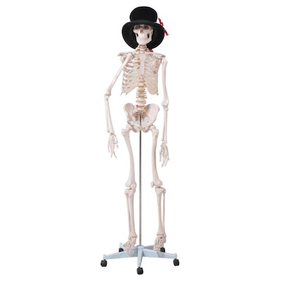 Resin Full-Scale Skeleton Model on Stand with Top Hat