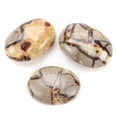 Polished Septarian Nodule Tumbled Stone Specimens