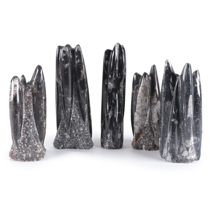 Polished Orthoceras Fossil Towers