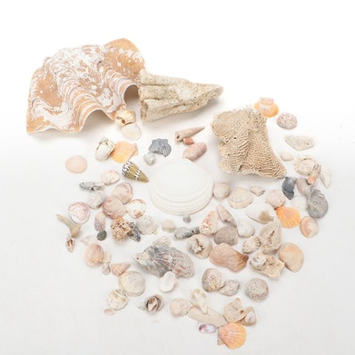 Seashell and Scleractinian Coral Specimen Collection