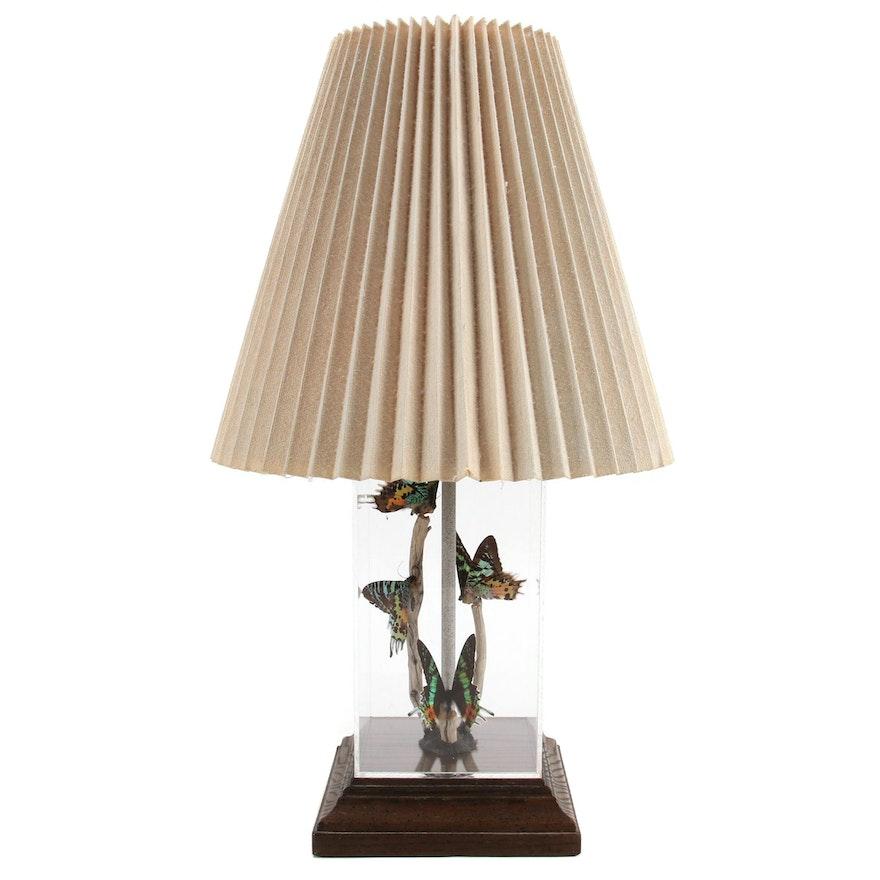 Mounted Madagascar Sunset Moth Specimens Display Table Lamp