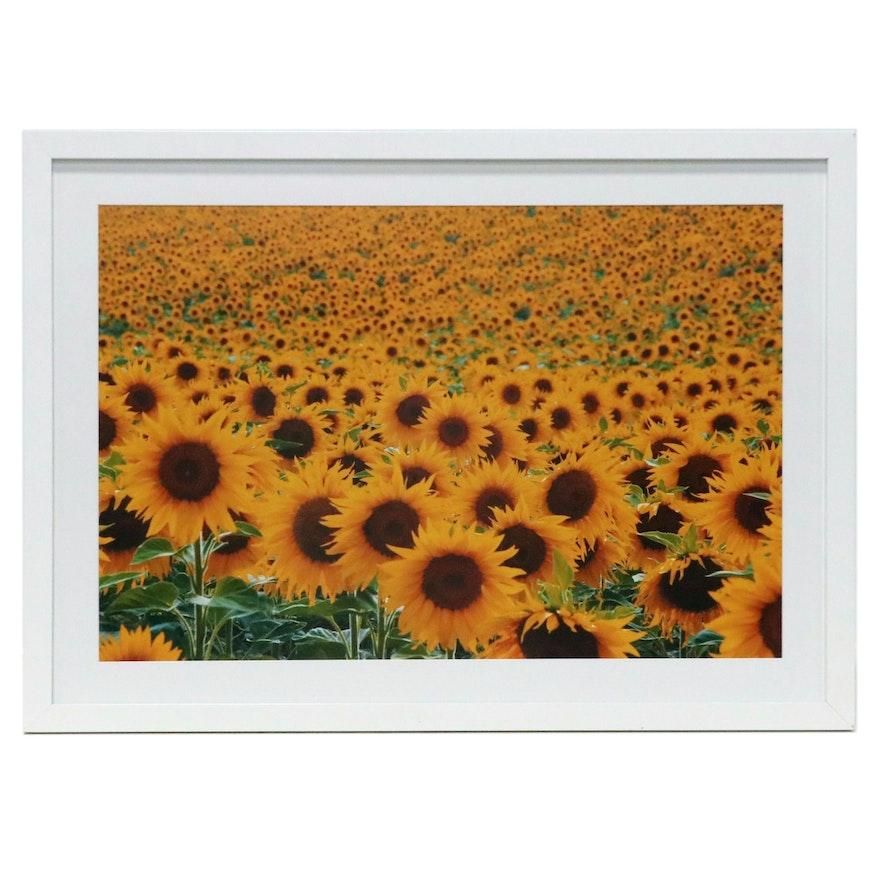 Chromogenic Photograph of Sunflower Field, Late 20th Century