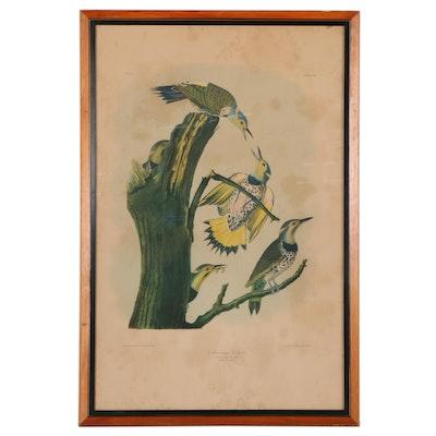 "Julius Bien Chromolithograph ""Golden-Winged Woodpecker,"" Late 19th Century"
