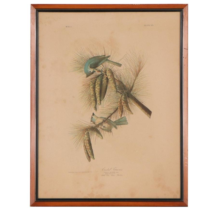 "Chromolithograph After John James Audubon ""Crested Titmouse"""