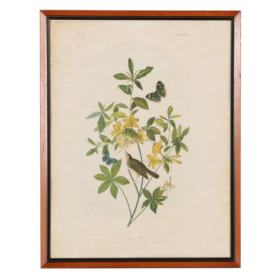 "Julius Bien Chromolithograph ""Swainson's Warbler,"" Late 19th Century"