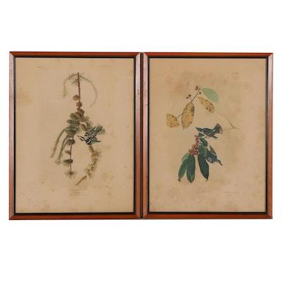 "Julius Bien Chromolithographs From ""Birds of America,"" Circa 1860"
