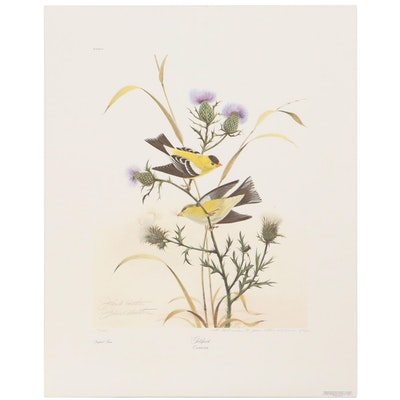 """John A. Ruthven Offset Lithograph """"Goldfinch,"""" Late 20th Century"""