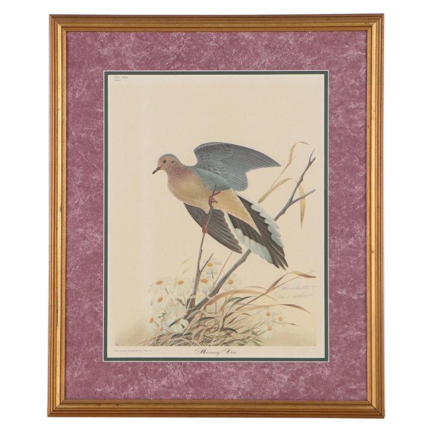 "John A. Ruthven Offset Lithograph ""Morning Dove,"" Late 20th Century"