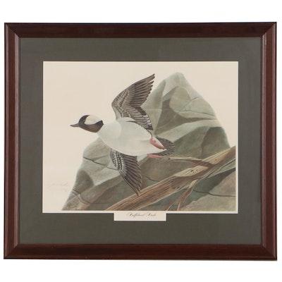"John A. Ruthven Offset Lithograph ""Bufflehead Duck,"" Late 20th Century"
