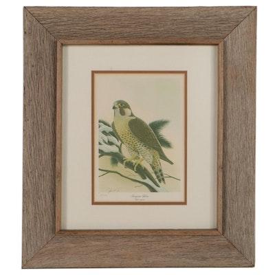 "John A Ruthven Offset Lithograph ""Peregrine Falcon,"" Late 20th Century"