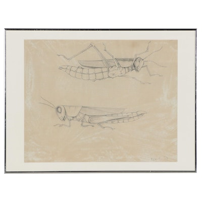 Graphite Drawing of Grasshoppers, 1972