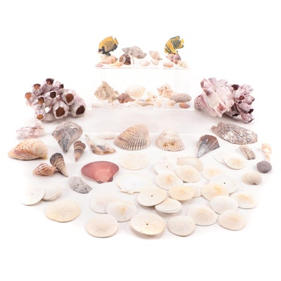 Acorn Barnacle, Sand Dollar, and Other Ocean Shell and Stone Specimen