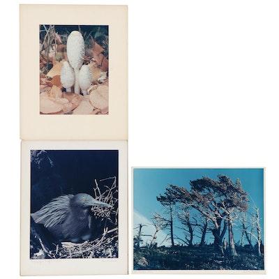 "Grant Haist Photographs ""Galapagos Night Heron"" and More"