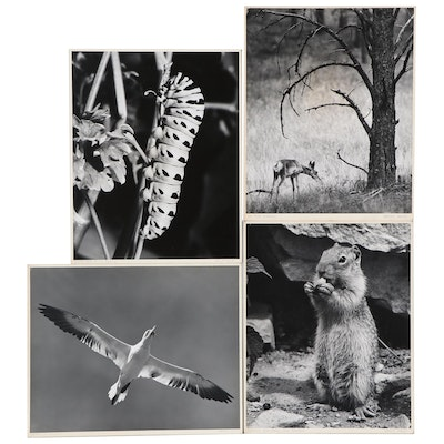 """Grant Haist Photographs """"In the Forest"""" and More"""