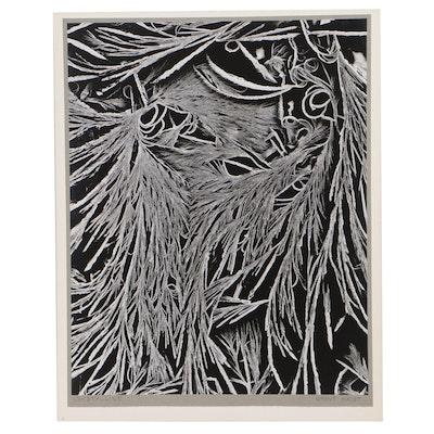 "Grant Haist Silver Print Photograph ""Crystalline"""